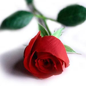 1264912932single-red-rose